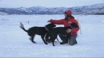 That's Mushing ! Emil Inauen et ses chiens de traineau