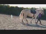 « Ce n'est pas un cheval et vous n'êtes pas dans un manège, c'est un partenaire de danse. »