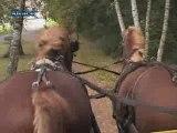 Le retour du cheval en ville (Alsace)