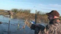 chasse aux canards