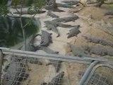 Djerba - Tunisie - Crocodile