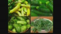 Plant & Grow Organic Tomatoes cucumbers, peppers or zucchini