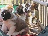 Crystale x Aldo les bébés ont 5 semaines, parc extérieur 3