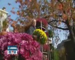 Variétés de fleurs qui orneront les tombes ce weekend de Tou