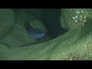 plongée sur l'épave  la Mystérieuse 2009