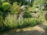 le jardin de joelle été 2009
