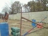 Lorenzo et moi saut d'obstacle!