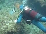 plongée aux iles Medes