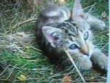 photos de mes chats