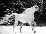 Les chevaux des animaux super
