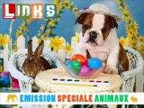 Kronik spéciale animaux Links Radio