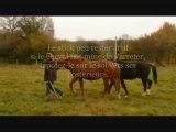 Astuce d'éthologie pour les chevaux retifs en longe.