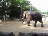 Chang mai- Elephants de Thailande