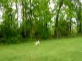 """""""Wally On The Run"""" Steve Martin"""