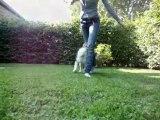 Ilow Blue, Border Collie, freestyle canin, autumn 2009