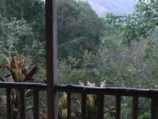 Le cri des singes hurleurs de Nicoya