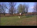 DOG AND HORSE PLAY TIME!