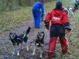 rassemblement chiens de traineau corrèze