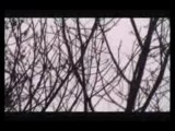 Dois OVNIS Filmados nos EUA 12/11/2009