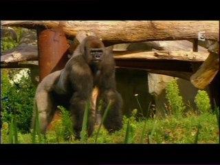 L'espace grands singes du zoo de La Palmyre