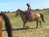 Grand galop dans les chaumes. Stage d'équitation nature.