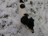 benji aime la neige