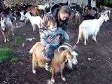 Chèvres 13-12-09