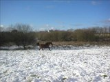 Quisolyn dans la neige, hiver 2009