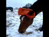 Titou en hiver - protégé du froid