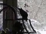 Tsuki et la neige