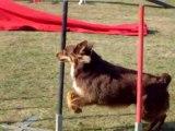 Concours d'agility à Argentan avec Brisca le27/09/2009