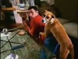 Bud light bad dog