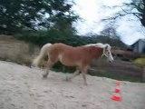 Mon poney qui saute la bariere .. xD