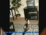 hommage à Minouche,ma 1ere chatte(disparue au primtemps 02)