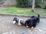 frere et soeur les meilleurs amis (25/12/2009)