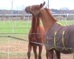 2009.12.26 jeux Inari Orval & Emilio