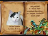 Album chat du refuge des Amis des Bêtes à Aix les Bains