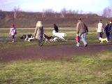 Dago joue avec d'autres chiens
