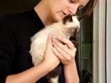 Chat bébé Siamois