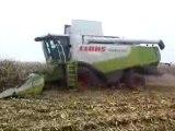 Mais grain 2009