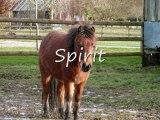 les poneys et les chevaux du centre équestre de la Haye !