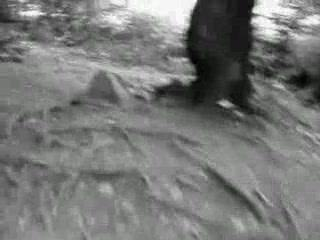 Homme des bois projet 1