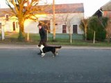 Nity trotte le 1er janvier 2010