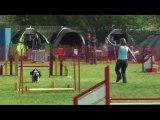concours agility saison 2009 c'ven agility partie 2