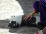 Amazing cat (chat incroyable)