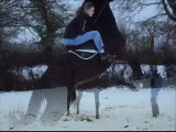 mes chevaux dans la neige