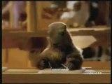 Pub Milka : La marmotte