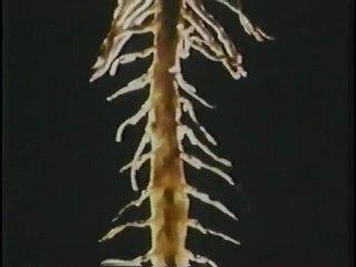 Le cerveau et le système nerveux (partie 1 de 3)