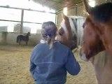 """"""" Le travail sur le mental du cheval est sans fin """" Andy Booth ."""
