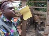 Ecoles familiales agricoles - Former les jeunes ruraux aux métiers de l'agriculture